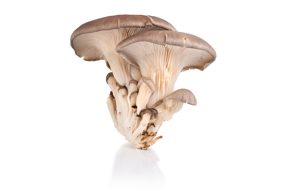 hist01_fungi