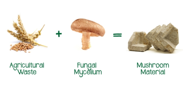MushroomMaterialProcess